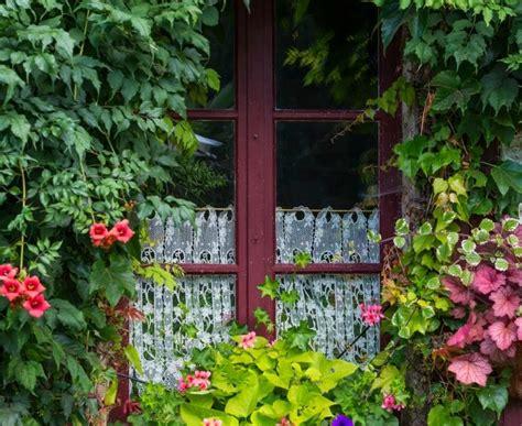 piante da davanzale fiori e piante da mettere sul davanzale donna moderna