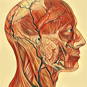 Heisser Kopf Ohne Fieber : kopf und gliederschmerzen ohne fieber herpesviren dr m kalitzky pdf cetegrippal plus ~ Frokenaadalensverden.com Haus und Dekorationen