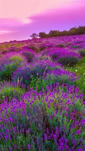 Lavender Wall Paper - impremedia net