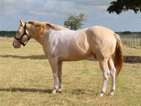 horse breeds beginners beginner friendly fun