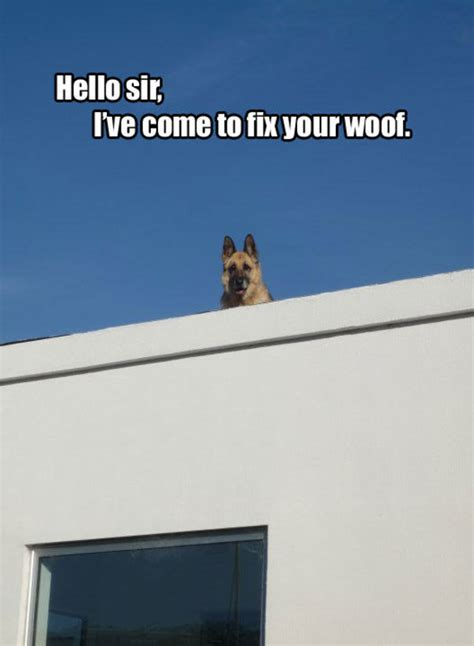 Roof Dog Know Your Meme