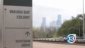 Two-thirds of bats at Buffalo Bayou displaced since ...