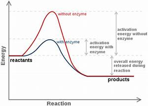 Enzymes And Reaction Rates