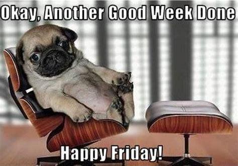 Happy Friday 13th Funny Animals