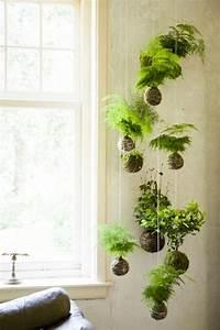 Plante Pour Appartement : plante interieur archives photos de magnolisafleur ~ Zukunftsfamilie.com Idées de Décoration