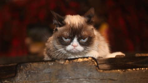 Grumpy Cat Wins $710,000 Lawsuit, Celebrates With A Joyous