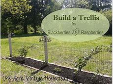 How to Build a Trellis for Blackberries and Raspberries