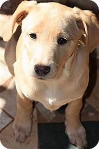 Luke | Adopted Puppy | Prince William County, VA | Italian ...