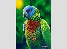 St Lucia Parrot Fine Colours Painting by Christopher Cox
