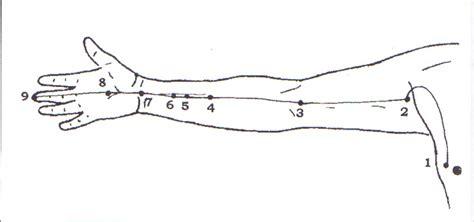 meridien du poumon acupuncture shiatsu fran 231 oise couteron le m 233 ridien d acupuncture quot ma 238 tre cœur quot