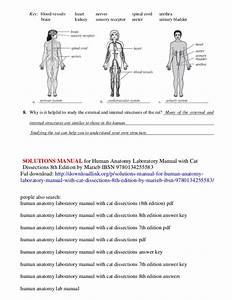 Solutions Manual For Human Anatomy Laboratory Manual With