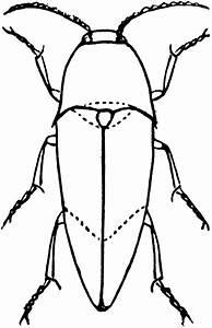 Beetle Clip Art - Cliparts.co