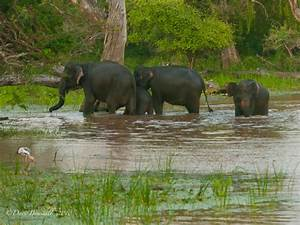 Asian Elephant Habitat - bliblinews.com