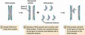 True  False  Visualizing And Characterizing Dna  Rna  And