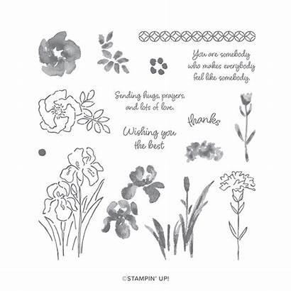 Iris Inspiring Stampin Stamp Photopolymer Card Cards