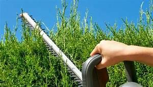 Wann Müssen Apfelbäume Geschnitten Werden : hecke schneiden wann ist der beste zeitpunkt und wie geht es ~ Lizthompson.info Haus und Dekorationen