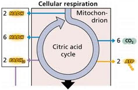 insights  cell division dna replication