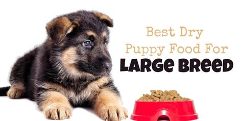 dry puppy food  large breed puppies large breed food