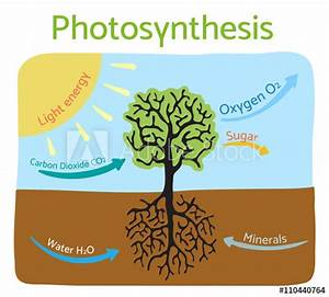 U0026quot Photosynthesis Process Diagram  Schematic Vector
