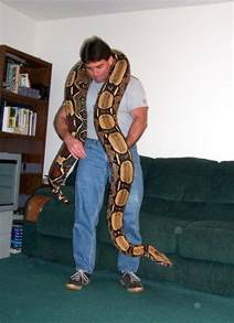 Central Carpet Python by Pros And Cons Of A Red Tailed Boa Snakes