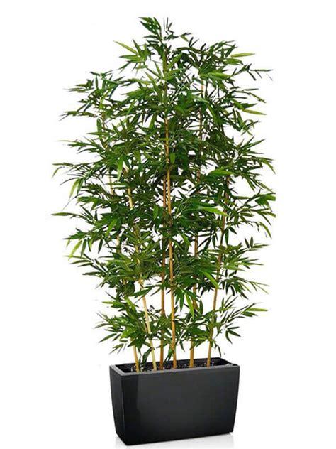 piante da terrazzo perenni piante perenni da terrazzo particolari per un tocco orientale
