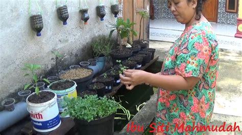 Ini sekian resep bakwan jagung ala fimela dengan banyak variasi. Pemanfaatan Air Kolam Sebagai Pupuk Organik Cair Budidaya ...