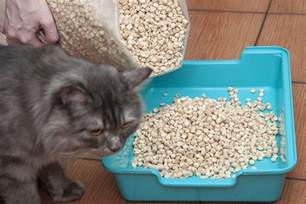 eco friendly cat litter your eco friendly guide to cat litter petspot