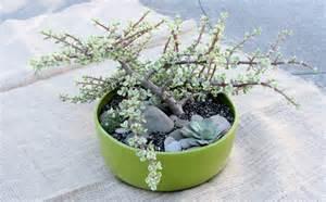 Succulent Potted Plant Arrangements