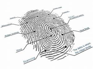 Live Scanning The News  New Low Cost 3d Contactless Fingerprinting System