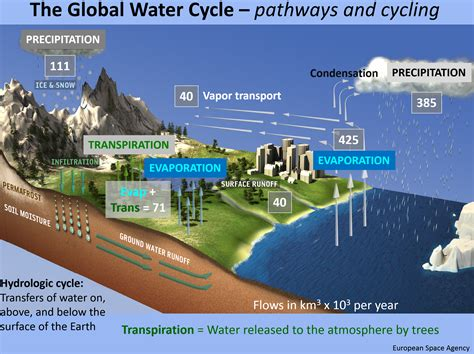 Diagram Of A Water by The Global Water And Nitrogen Cycles