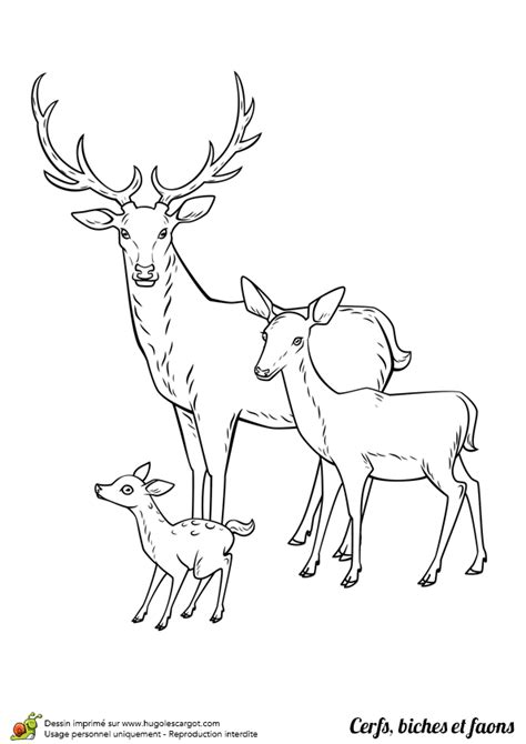 cuisine chevreuil dessin à colorier cerf biche et faon en famille