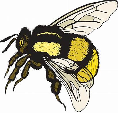 Bee Bumble Clip Clipart Cartoon Bumblebee Bees