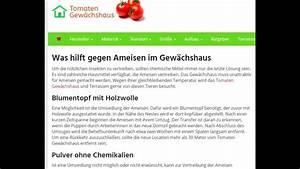 Was Gegen Ameisen : was hilft gegen ameisen im gew chshaus youtube ~ Whattoseeinmadrid.com Haus und Dekorationen