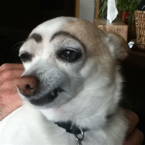 Dogs with Fake Eyebrows