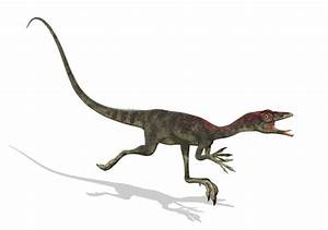 Compsognathus Pictures & Facts - The Dinosaur Database