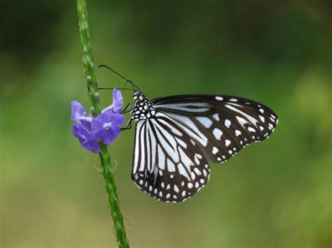 attracting butterflies   miami garden