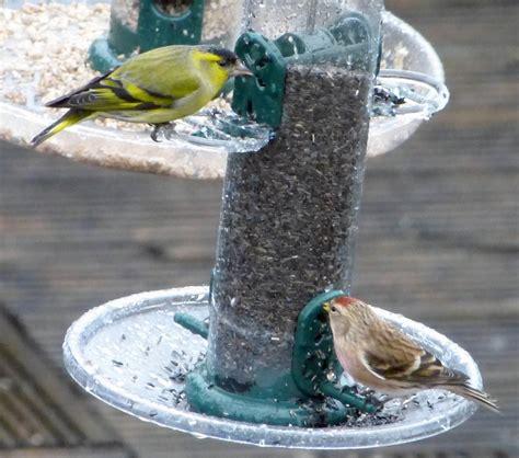 birds that eat niger nyjer seed feeding garden