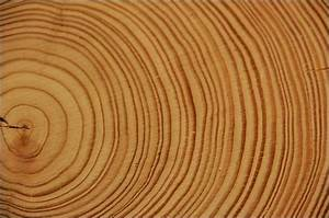 Tree Of Life Meaning  Music Of Trees - What Tree Rings Sound Like