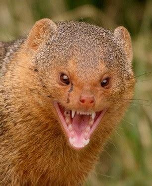 Mongoose's Model.Populate() – Nick Nauert – Medium