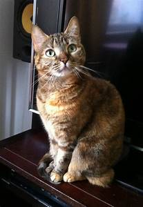 pictures - one of the many cat websites  Domestic