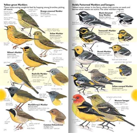 yellow birds john muir laws