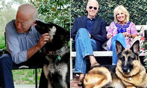 Joe Biden to usher in first ever rescue dog into the White ...