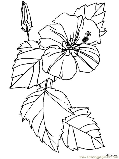 printable coloring pages  flowers az coloring pages