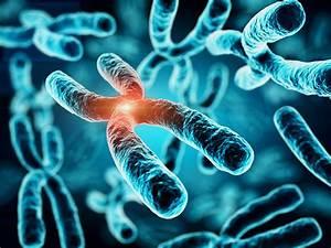 Genetic Risk Score For Vitamin D Predicts Ms Relapse