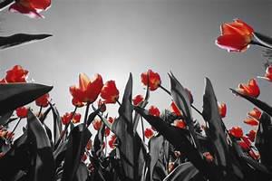 Schwarz Weiß Bilder Mit Farbe Städte : fotofilter effekte 1 klick foto bearbeitung f r perfekte fotos ~ Orissabook.com Haus und Dekorationen