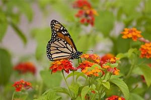 Image result for butterfly in garden image