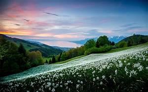 Nature, Landscape, Field, Trees, White, Flowers, Spring, Sunrise, Mountain, Sky, Bay, Sea, Shrubs