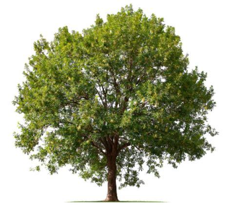 L'arbre Dans La Bible Et Dans Les Textes Article