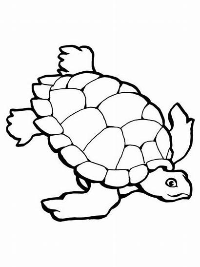 Turtle Coloring Sea Pages Printable Printables Research