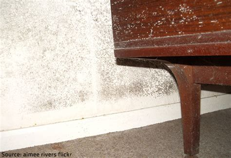 identifying mold odors and removing them from your home